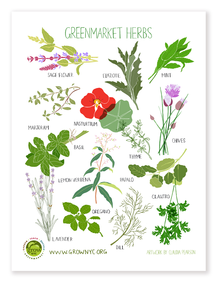 Herb Poster | Claudia Pearson Illustration