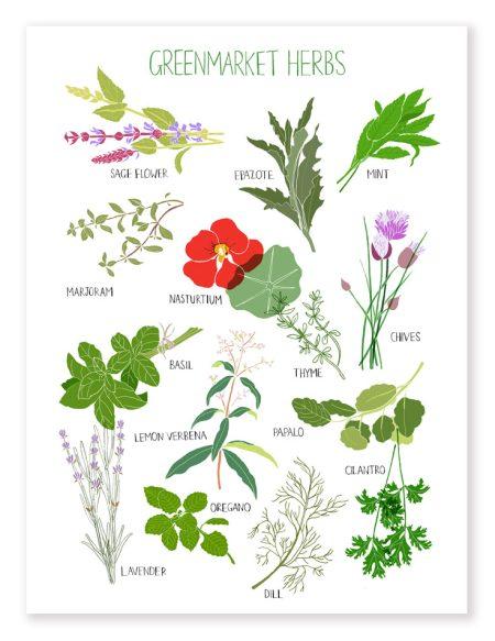 Greenmarket Herbs